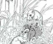 Coloring pages Field mouse