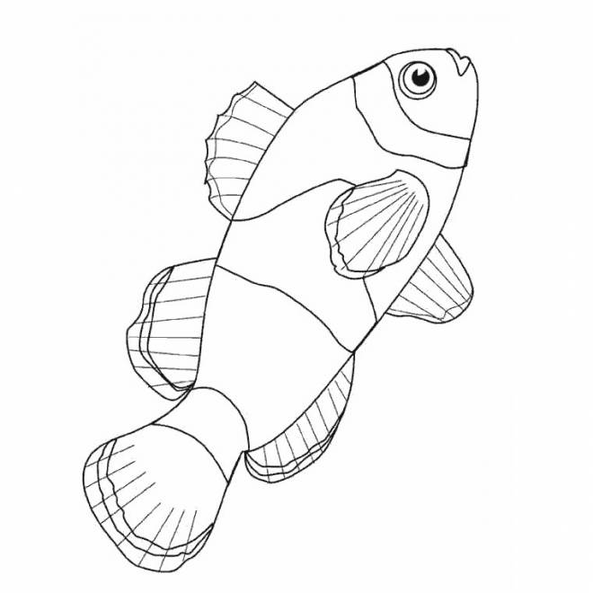 Free coloring and drawings Maternal fish Coloring page