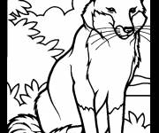 Coloring pages a beautiful fox to color