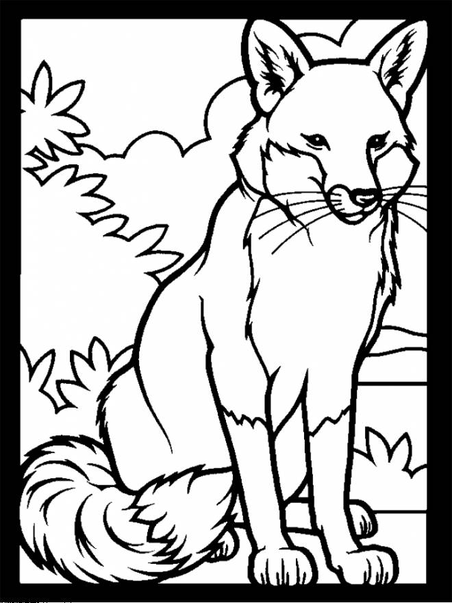 Free coloring and drawings a beautiful fox to color Coloring page