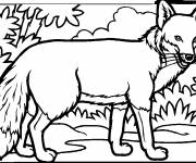 Coloring pages Adult Fox