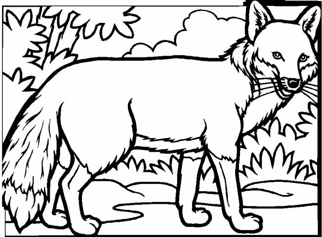 Free coloring and drawings Adult Fox Coloring page