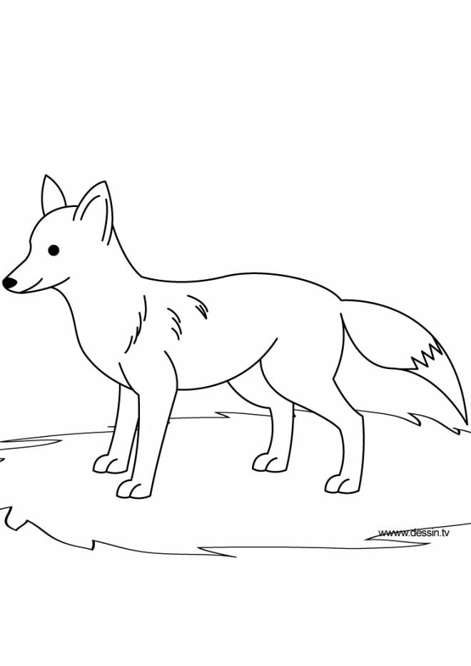 Free coloring and drawings Black and white fox Coloring page