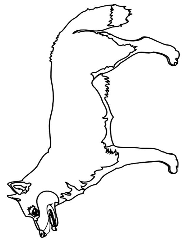 Free coloring and drawings Cutting fox Coloring page