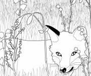 Free coloring and drawings Fox image Coloring page