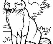 Coloring pages Fox in the wild