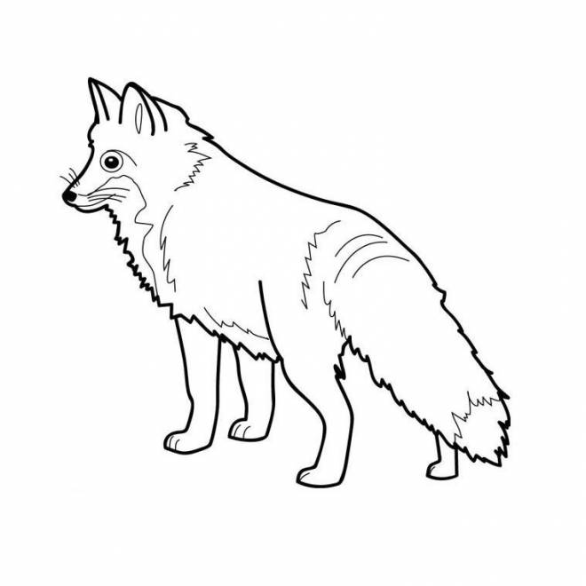 Free coloring and drawings Fox portrait Coloring page