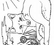 Coloring pages Fox under the sun