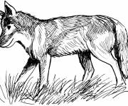 Coloring pages Fox walking in pencil