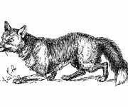 Coloring pages Realistic fox