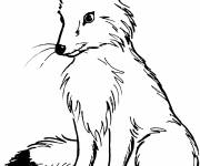 Coloring pages Red fox