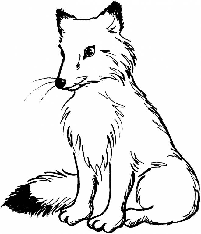 Free coloring and drawings Red fox Coloring page
