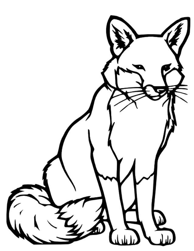 Free coloring and drawings Vector fox Coloring page