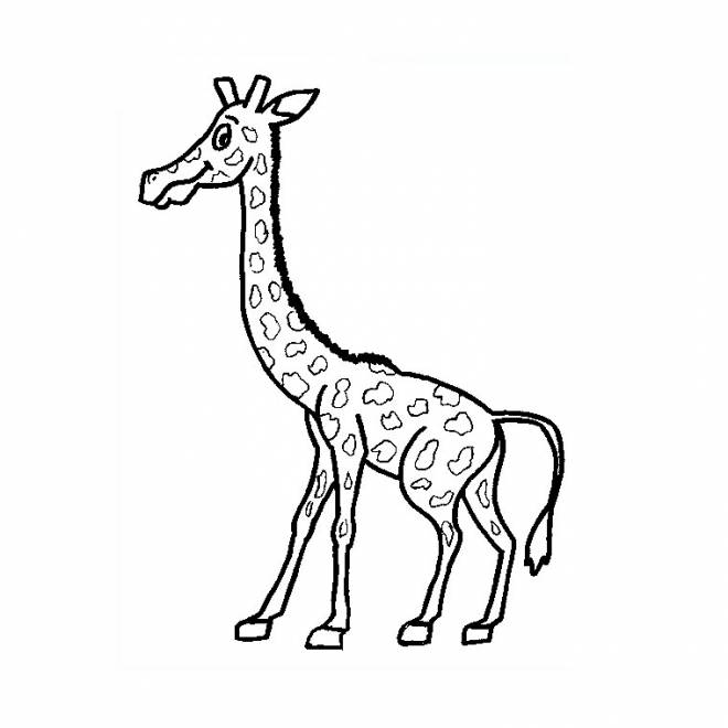 Free coloring and drawings A little Giraffe Coloring page