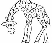 Free coloring and drawings Funny giraffe Coloring page