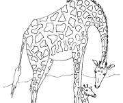 Coloring pages Giraffe and baby under the sun
