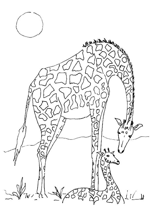 Free coloring and drawings Giraffe and baby under the sun Coloring page