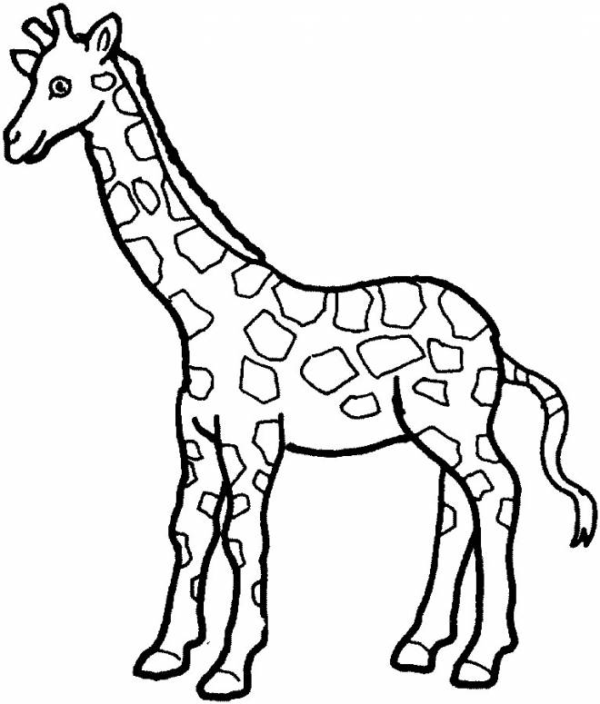 Free coloring and drawings Giraffe and its long neck Coloring page