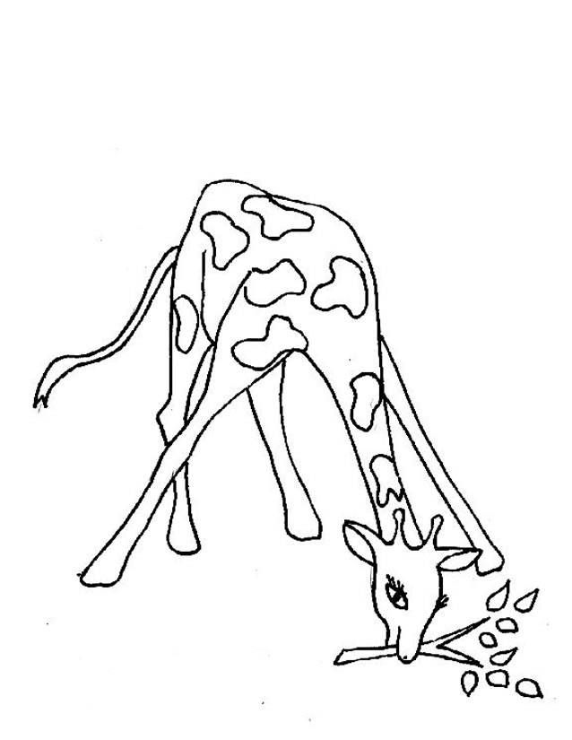 Free coloring and drawings Giraffe eating Coloring page