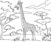 Coloring pages Giraffe eats from tree