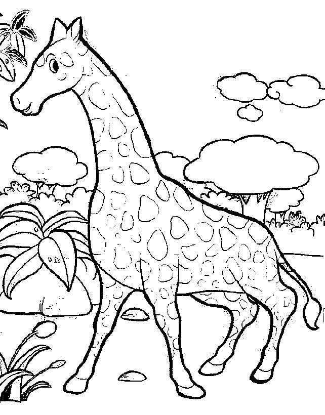 Free coloring and drawings Giraffe having fun in nature Coloring page