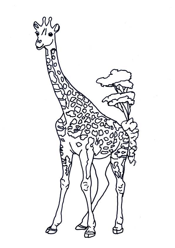 Free coloring and drawings Giraffe in the Savannah Coloring page