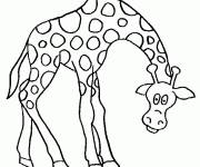 Free coloring and drawings Giraffe lowering his head Coloring page