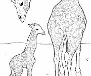 Free coloring and drawings Giraffe takes care of his little one Coloring page