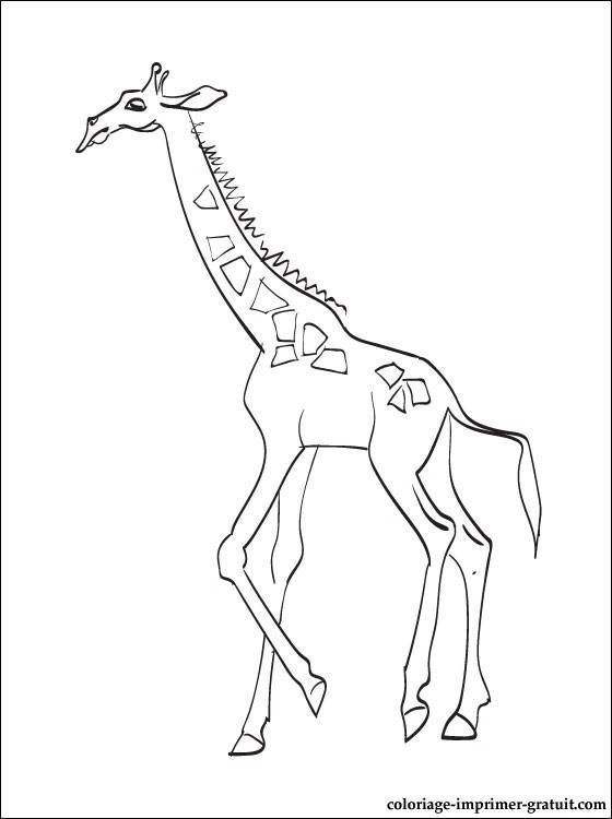Free coloring and drawings Giraffe to download Coloring page