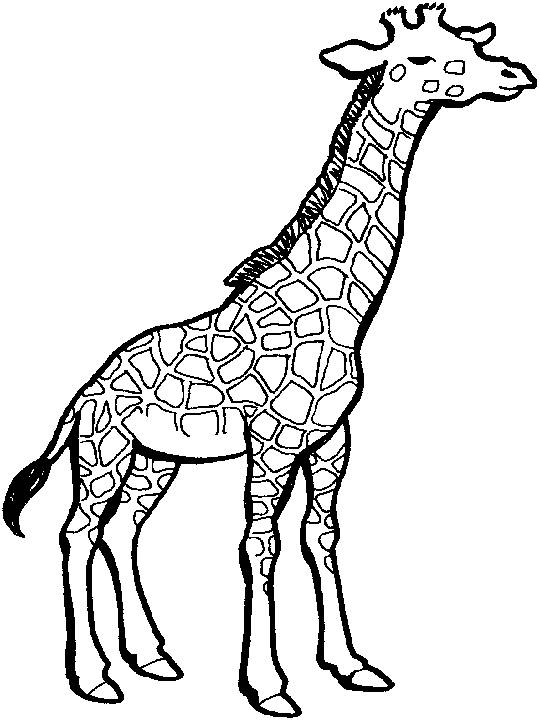 Free coloring and drawings Giraffe with closed eyes Coloring page