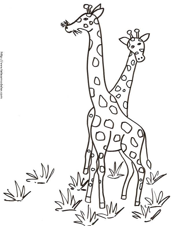 Free coloring and drawings Giraffes in Africa Coloring page