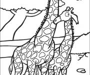 Free coloring and drawings lover giraffes Coloring page