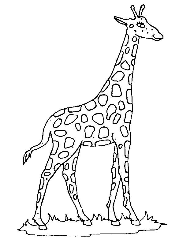 Free coloring and drawings Outdoor giraffe Coloring page