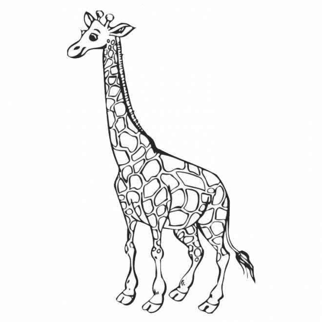Free coloring and drawings Simple giraffe Coloring page