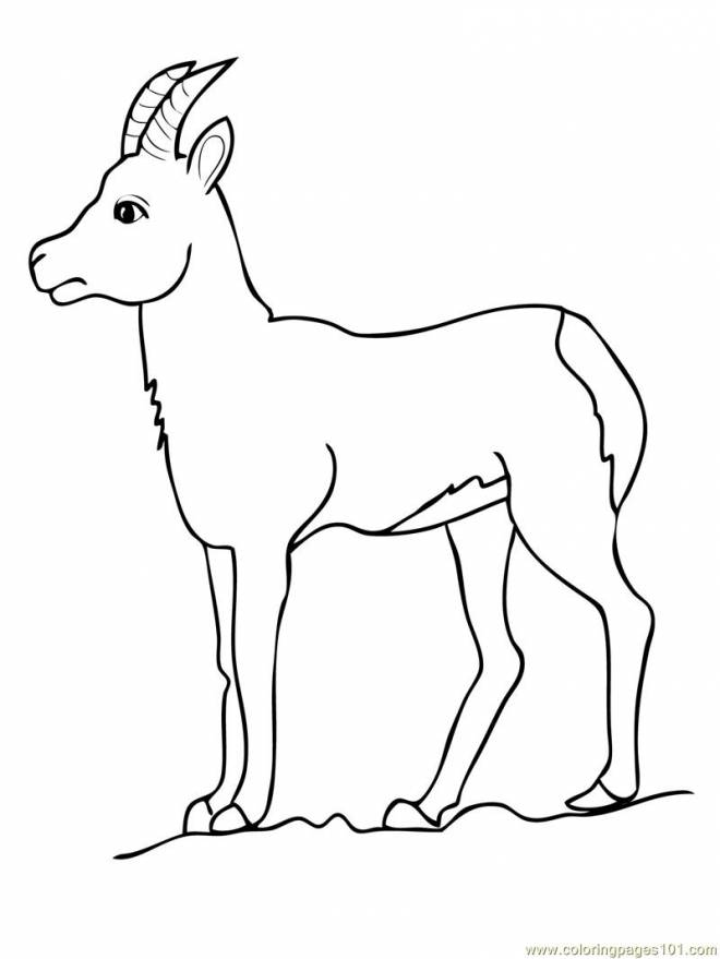 Free coloring and drawings A Beautiful Goat Coloring page