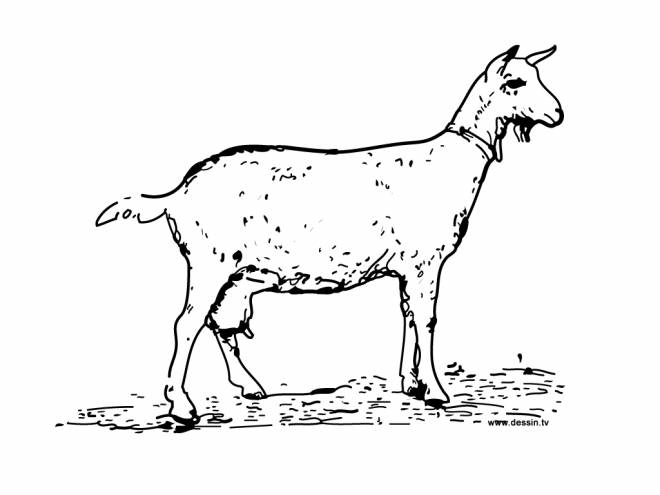 Free coloring and drawings A Goat in kindergarten Coloring page