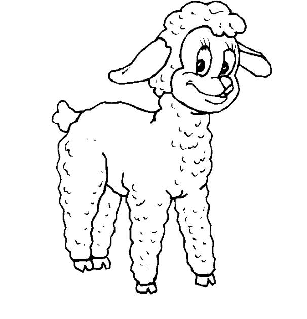 Free coloring and drawings A lamb Coloring page