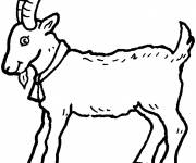 Free coloring and drawings A little goat Coloring page