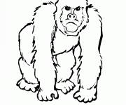 Free coloring and drawings Angry gorilla Coloring page