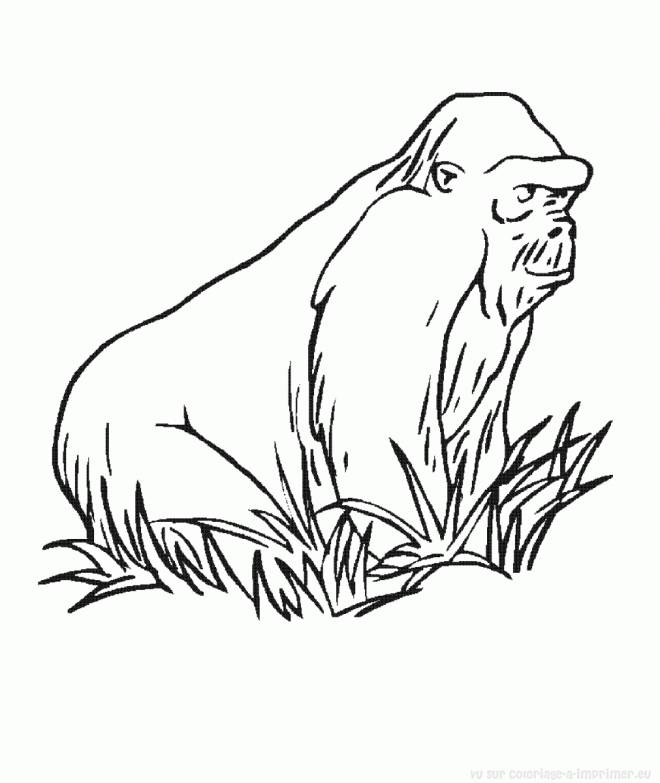 Free coloring and drawings Color gorilla Coloring page