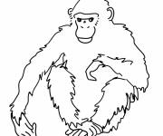 Free coloring and drawings Gorilla for child Coloring page