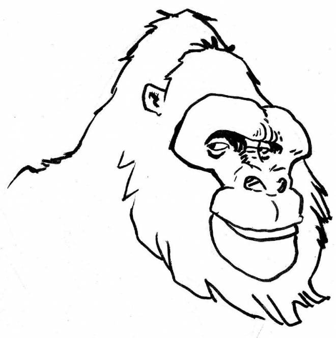 Free coloring and drawings Gorilla head Coloring page