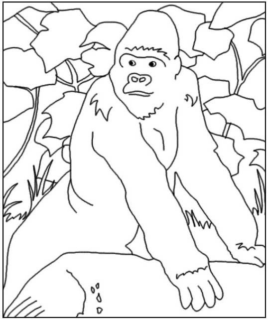 Free coloring and drawings Gorilla in the forest Coloring page
