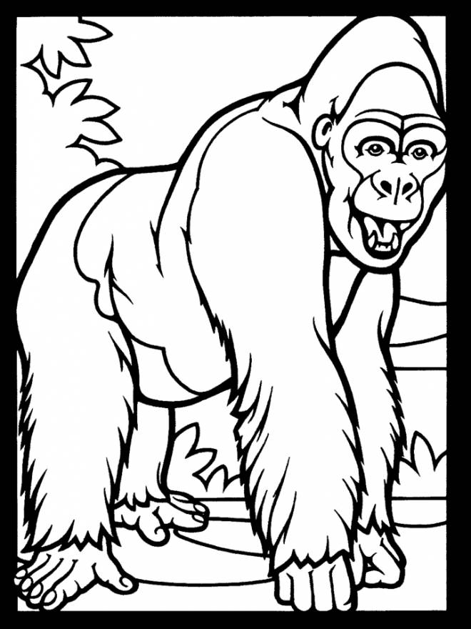 Free coloring and drawings Gorilla vector Coloring page