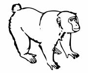 Coloring pages Little Gorilla