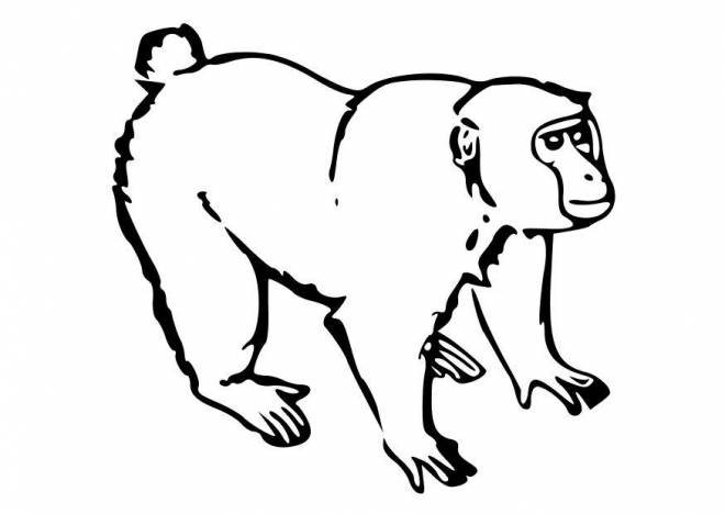 Free coloring and drawings Little Gorilla Coloring page