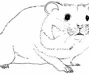 Coloring pages Hamster in black and white