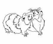Coloring pages Hamsters to download