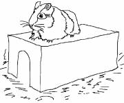 Coloring pages Russian hamster