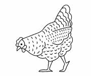 Coloring pages Chicken is looking to eat